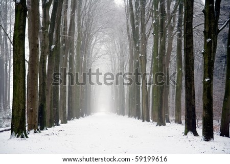 Forest on a cloudy winter day