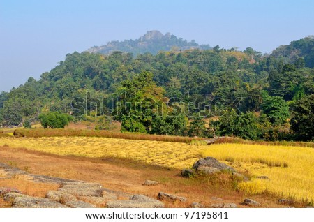 Forest on hilly place with farm land