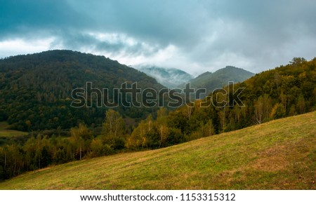 forest on the grassy hillside. moody autumn landscape in mountain. cloudy and foggy morning. trendy turquoise color toning #1153315312