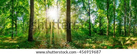 Forest panorama with sun #456919687