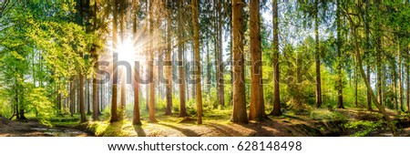 Forest panorama with sun  #628148498