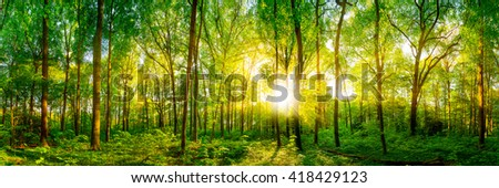 Forest panorama with sunshine #418429123