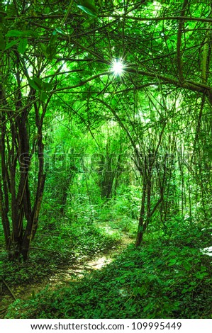 Forest path, green mystic forest at sunrise. - stock photo