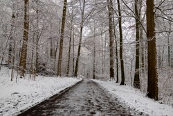 Forest path in Iserlohn Sauerland Germany on a frosty january day after heavy snowfall. Winter Wonderland with snow covered Beech and Oak trees, trunks and branches.