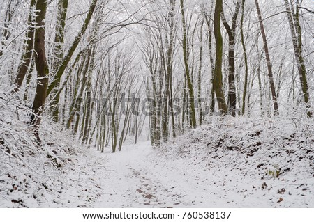 Forest path in snow-covered winter forest