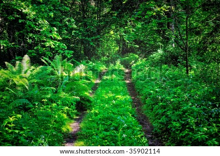 Forest path in the dense thickets of plants