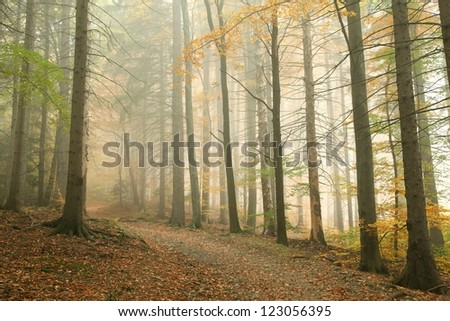 Forest path in the mountains on a misty October's morning.
