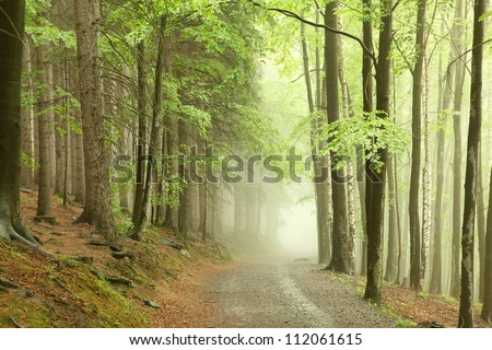 Forest path on the border between coniferous and deciduous trees.