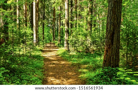 Forest path sunlight scene. Deep forest trail view. Forest trail landscape. Forest trail sunlight view