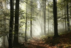 Forest path surrounded by fog in the sunshine.
