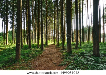 Forest path through a light-flooded forest, on both sides with dense green vegetation #1499051042