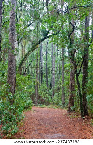 Forest path with a canopy of trees and Spanish moss including live oaks in South Carolina .