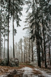Forest path with first fresh snow. Beautiful snowy trees. Cold winter day in countryside. Frozen trees. Christmas holiday scenery.White winter landscape. Splendid outdoor Xmas scene.Active day outdoor