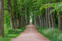 Forest path with trees in symmetry on both sides in Neerijnen, Province Gelderland, The Netherlands