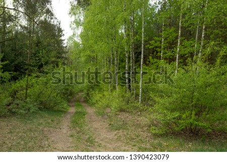 Forest paths and paths in the spring period. #1390423079