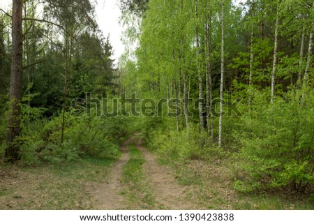 Forest paths and paths in the spring period. #1390423838