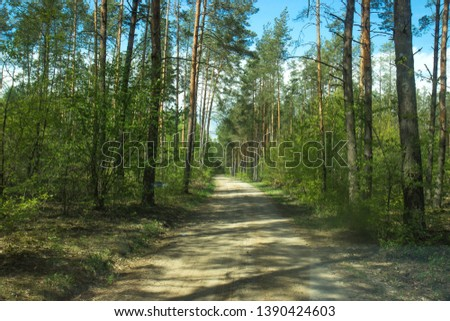 Forest paths and paths in the spring period. #1390424603