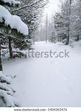 Forest pathway after a heavy snowfall. Iceland. #1404303476
