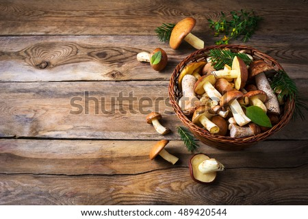 Forest picking mushrooms in wickered basket top view copy space. Fresh raw mushrooms on the table. Leccinum scabrum