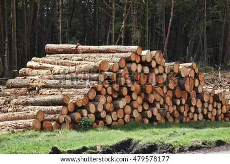 Get free stock photo of the log online download latest for Pine tree timber