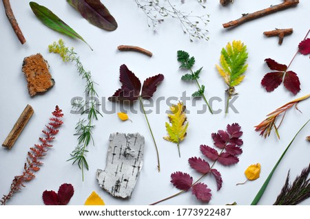 Forest plants, bark and twigs. Yellow, red and green leaves. Flat Lay. White background.