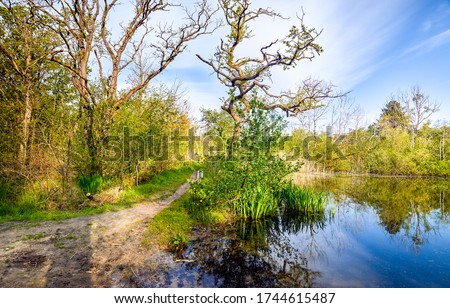 Forest pond shore path view