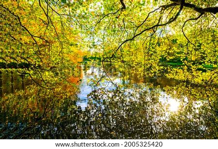 Forest pond through the autumn foliage. Autumn forest pond view. Forest pond in autumn fall scene