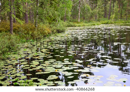Forest pond with water lilies