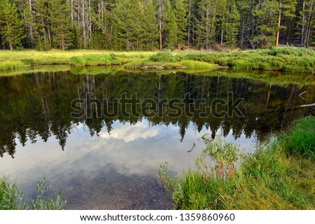 Forest reflected in water at Big Sandy Campground near Boulder, Wyoming, USA #1359860960