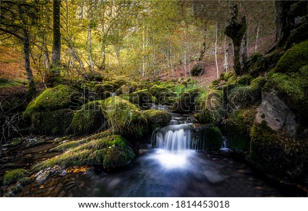 Forest river creek in autumn. Cold creek in autumn forest. Autumn water in autumn forest