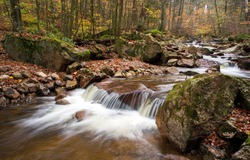 Forest river creek in autumn. Cold creek in forest. River creek in autumn forest. Autumn forest cold creek flowing