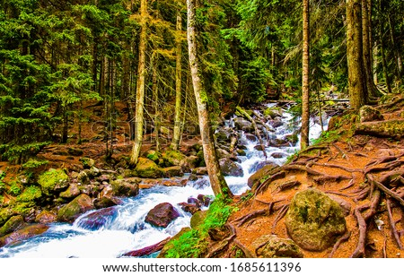 Forest river creek scene. River creek in forest. Forest river stream view. Forest river rocks water flowing