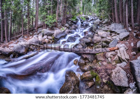 Forest river creek water stones. Rapid river creek in forest. River creek in forest
