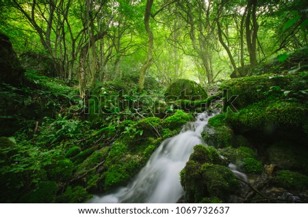 forest river, green natural landscape