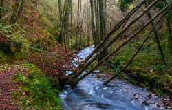Forest river in autumn day. River creek in autumn forest. Forest river creek. Forest river creek flow