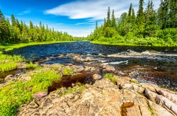 Forest river in summer scene. River rapids in summer forest