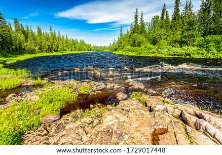 Photo of  Forest river in summer scene. River rapids in summer forest