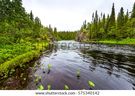 Forest river landscape #575340142