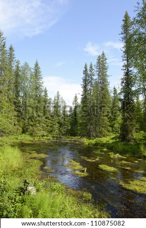 Forest River. Northern Finland