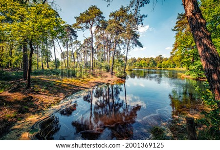 Forest river on a clear summer day. River in forest. Forest river landscape. Pine forest river landscape