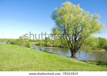 forest river on background trees and sky