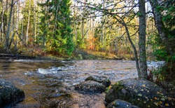 Forest river scene. Autumn forest river flow. Forest river water in autumn season. Forest river autumn