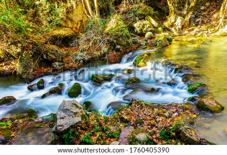 Forest river stream water in autumn. Autumn river stream flow. River stream in autumn. Autumn stream water