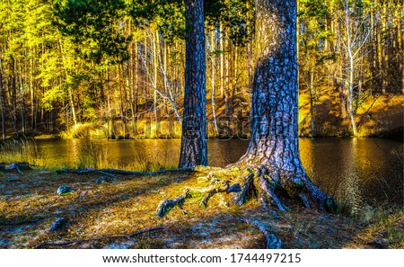 Forest river tree trunks view
