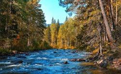 Forest river trees nature woods landscape