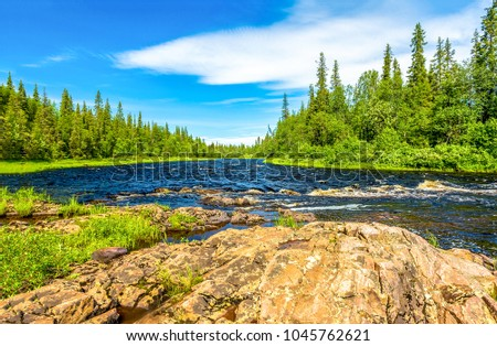 Forest river trees summer panorama landscape