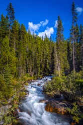 Forest river water flow vertical scene