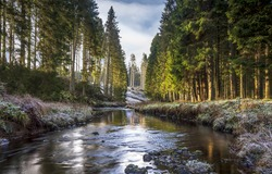Forest river water landscape. River creek in forest. Forest river creek view. Forest cold creek river landscape