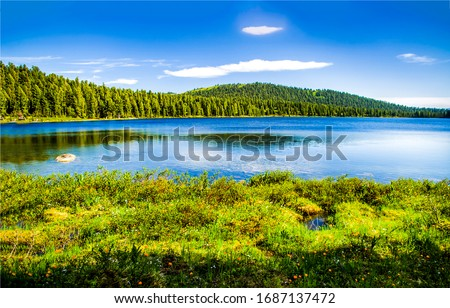 Forest river water landscape. Summer nature river landscape. River in sunny day. Summer river landscape