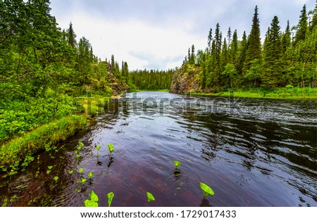 Forest river water scene view